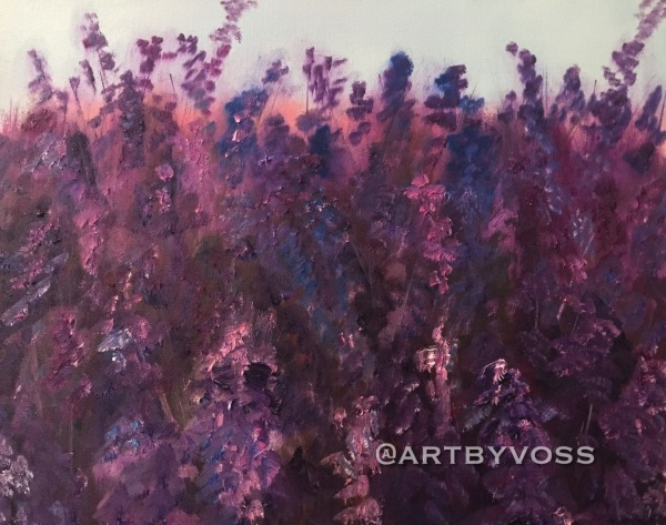 Medium Lavender at Sunset