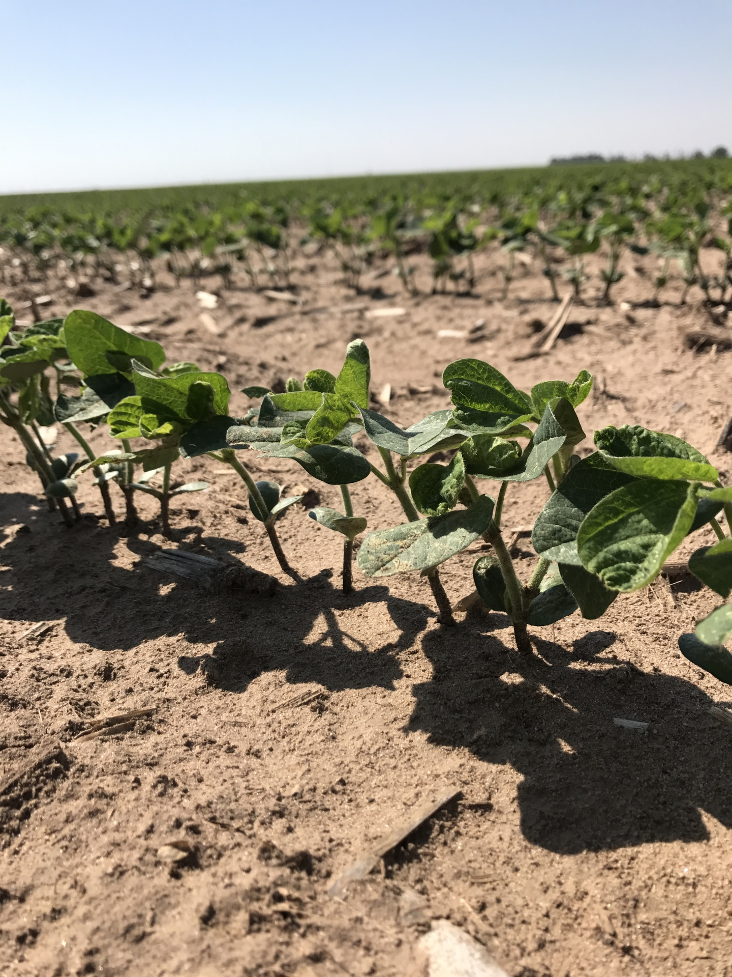 Midwest UAS Soybeans
