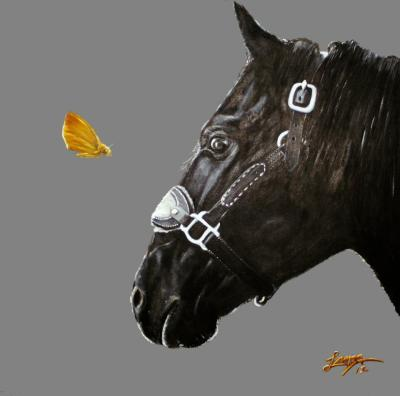 Black horse staring at yellow butterfly