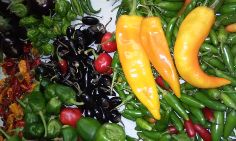 Pepers, Chilli Peppers, Bannana Pepers, Jalpeno Peppers