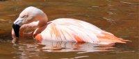 reflections of a flamingo by brandy stark of bstarkart from saint petersburg florida