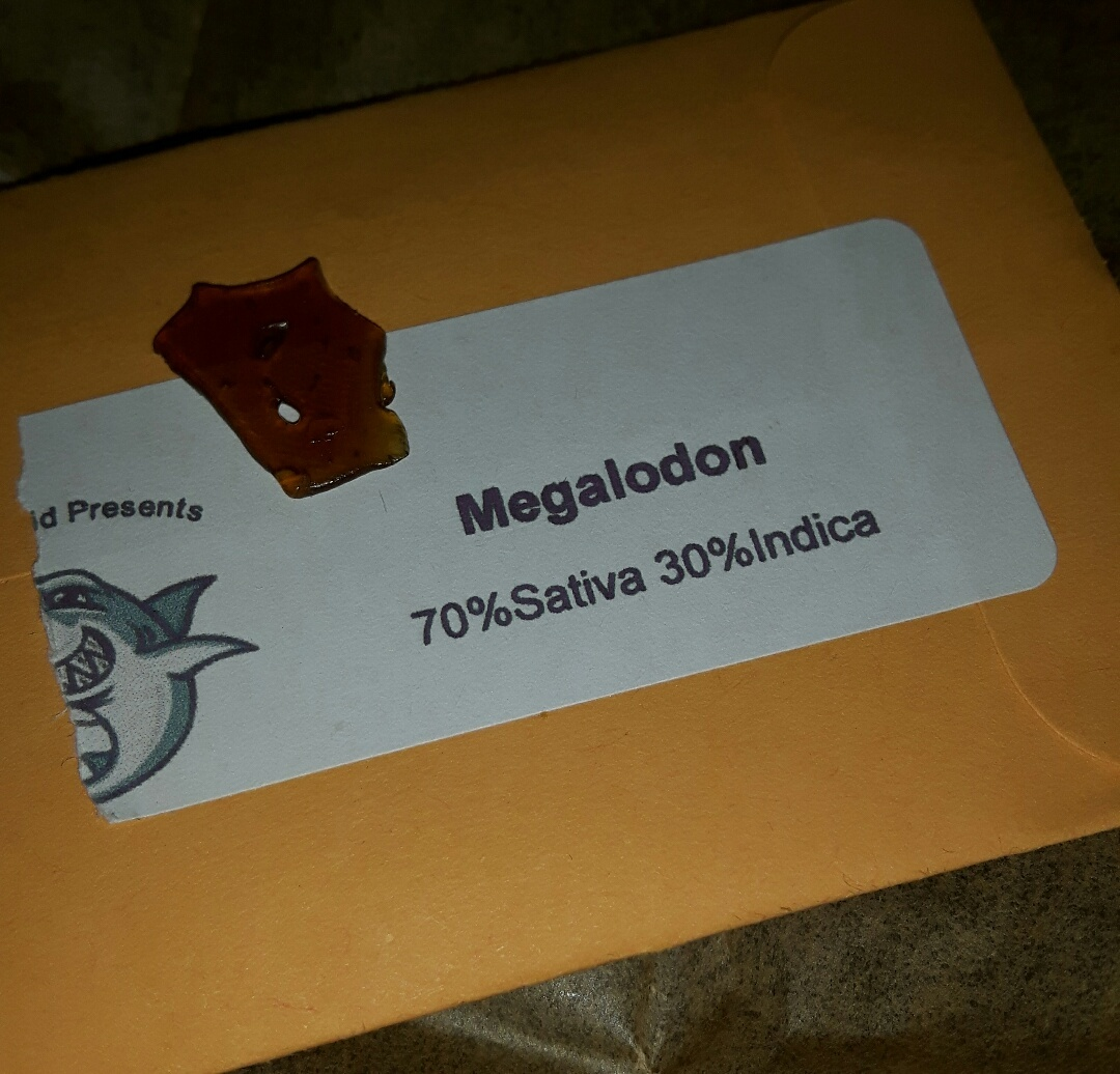 Megalodon shatter with information on the package.