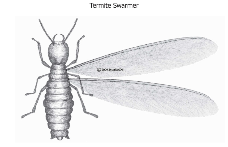 Buying a bug zapper?