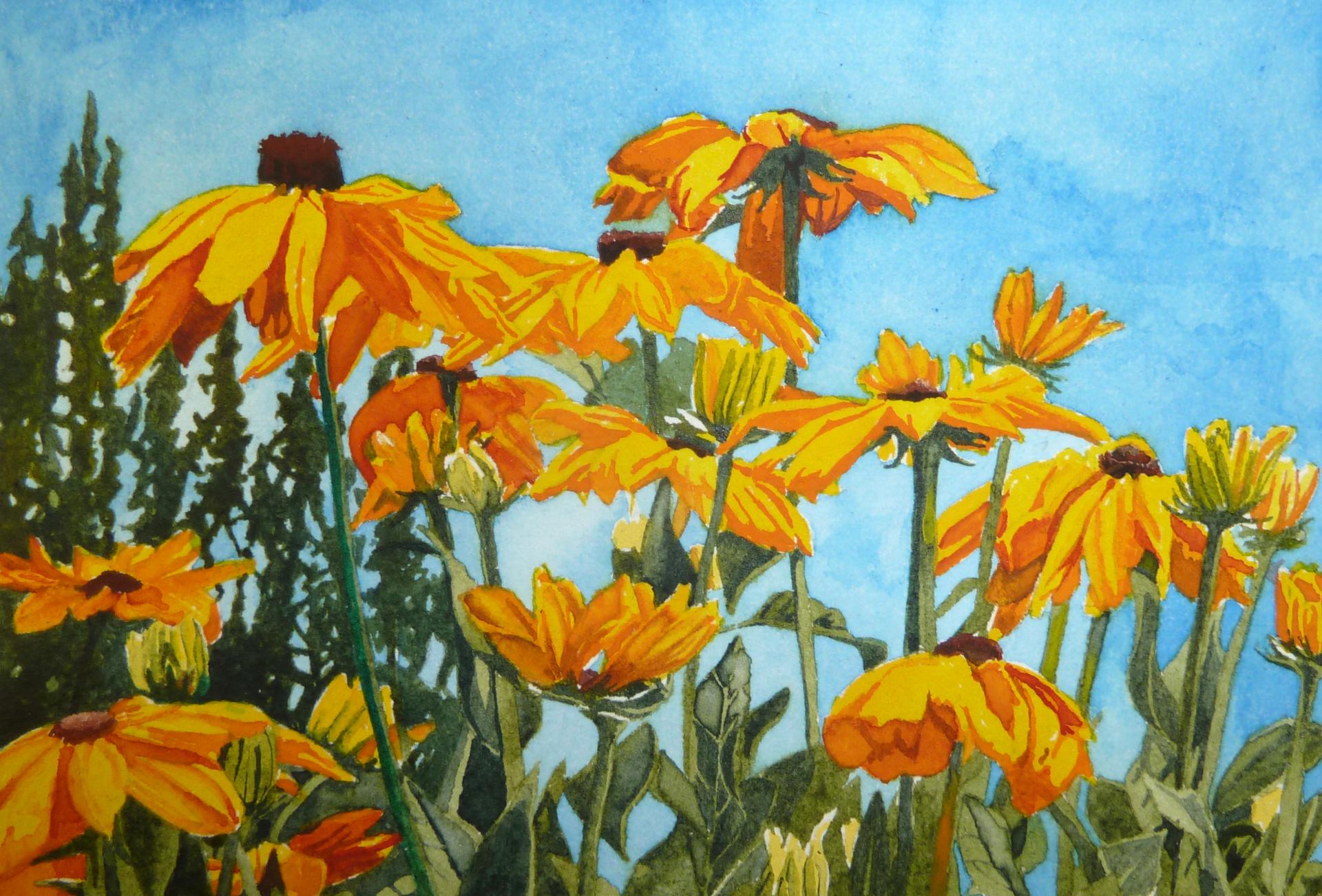 Pt Reyes Sunflowers