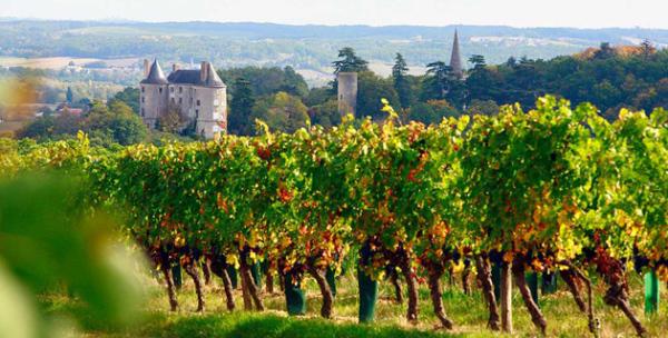 Chateaux & vines