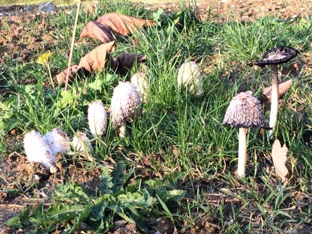 Autumn in The Lot & Garonne
