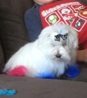 Sir Casper