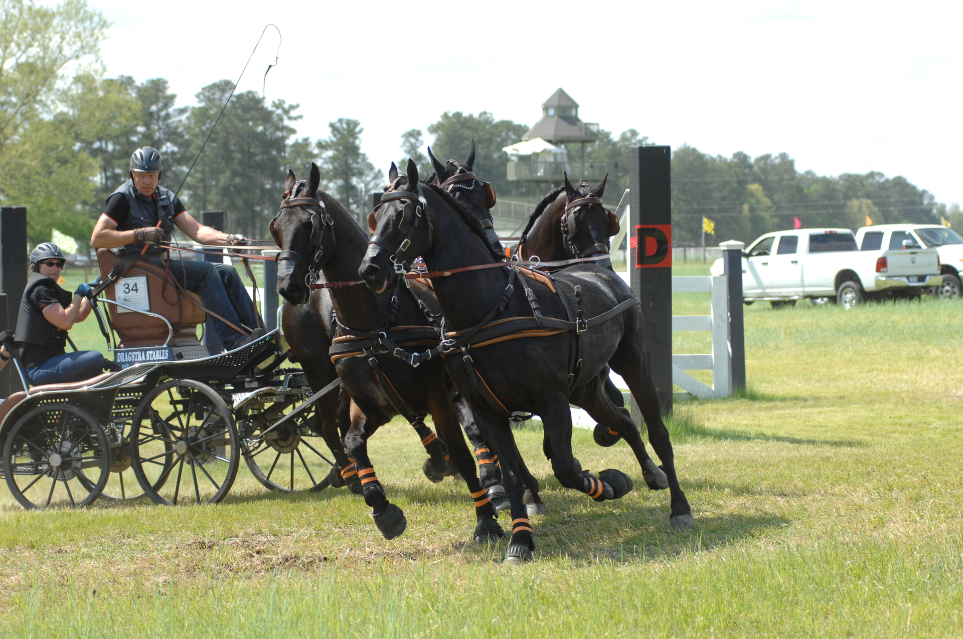 arabo-friesian-four-in-hand-dragstra-southern-pines-2017