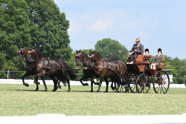 horse-training-driving-cde