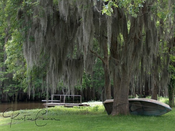 Cypress Trees filled with Spanish Moss on Lake Bistineau