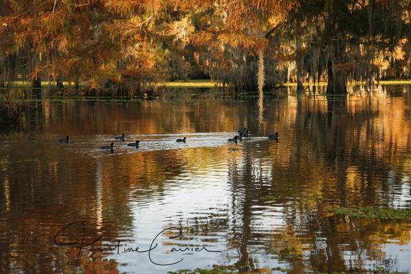 Ducks on the water Lake Bstineau