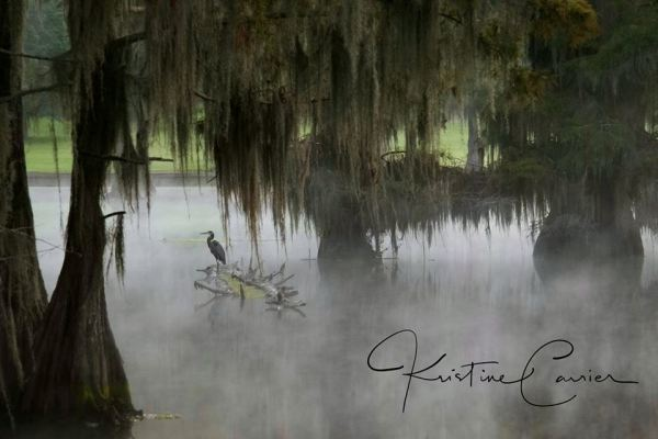 A crane sits on a log and fishes in the fog at Camp Bistno