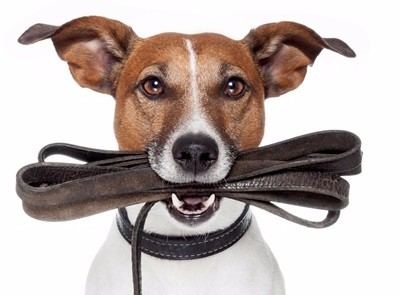 Why Your Dog Needs To Be Walked!