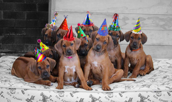 Happy Birthday Midnight Puppies