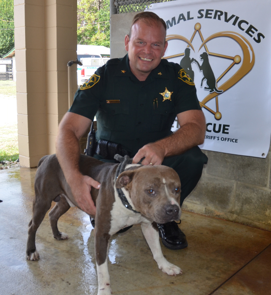 Animal Services Pet of the Week: Hayes