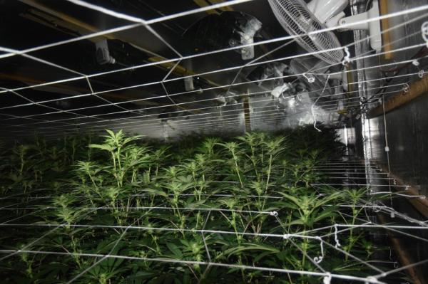 Drug unit dismantles large grow house on heels of meth dealer sweep