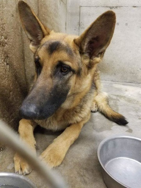 Dagger 3 - at shelter before rescue