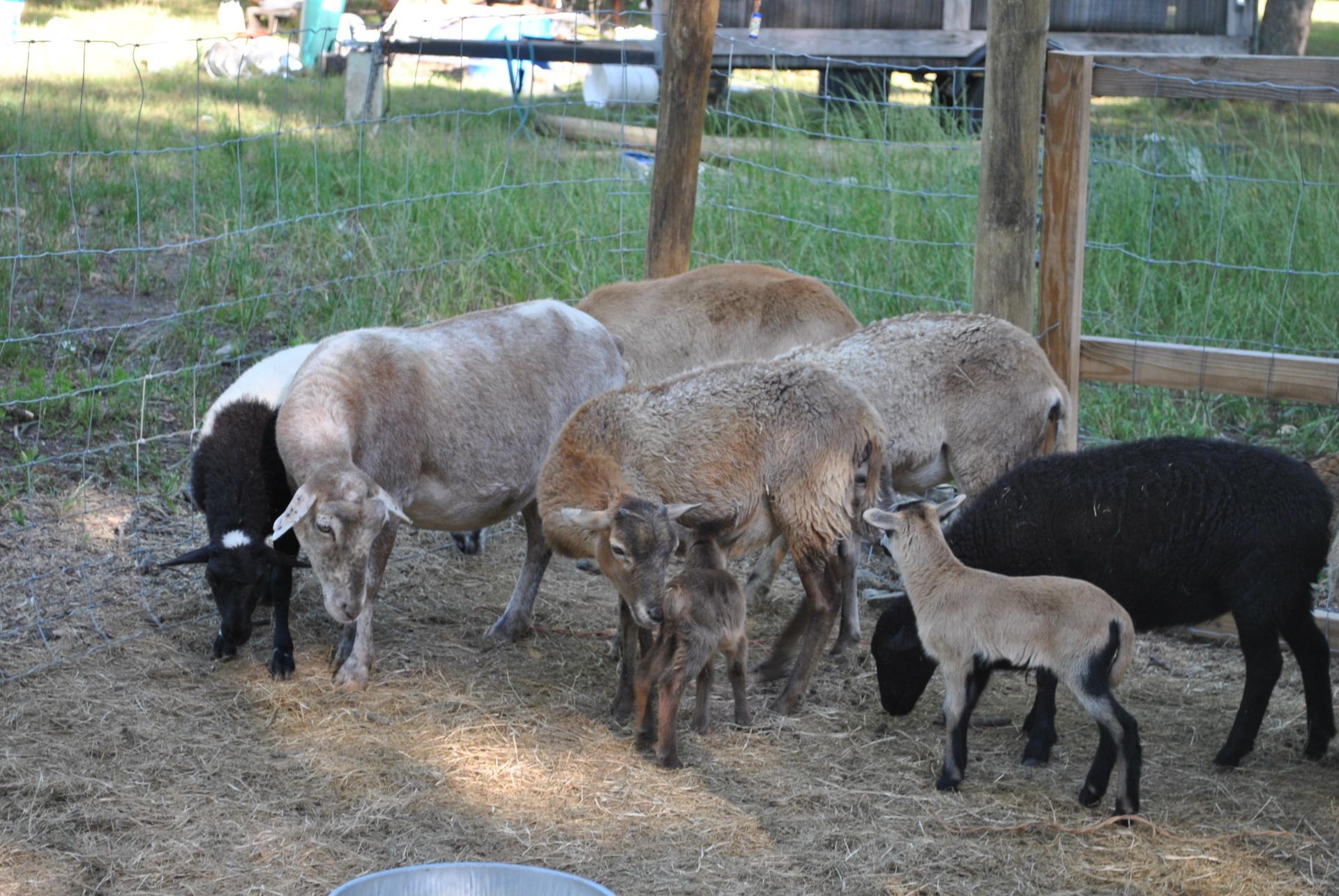 Lamb Meeting
