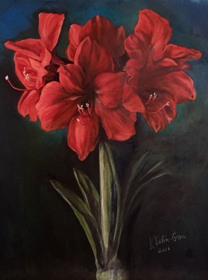 Amaryllis- Private Collection