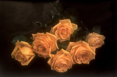 Dream Of Yellow Roses- Available