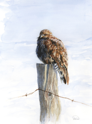 Hawk at Winter Dawn