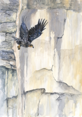 Eagle Descent from White Cliffs