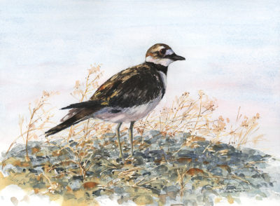 Killdeer Upstream
