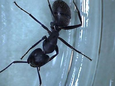carpenter ants,savannah,georgia