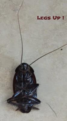 American roach, savannah, georgia
