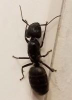 Ants mcdonough, ants atlanta, ants savannah, ants pembroke