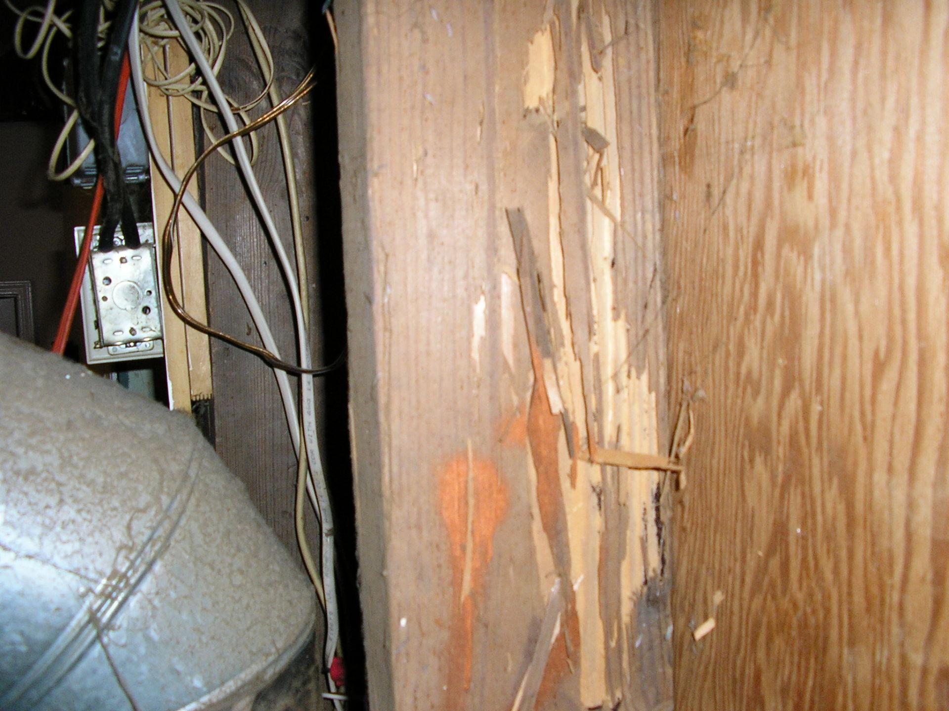 drywoodtermitesinga