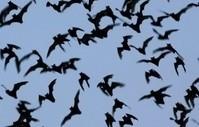 bats clark mcdonough