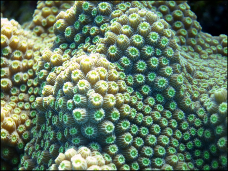 Closeup of coral head at Little Cayman Island
