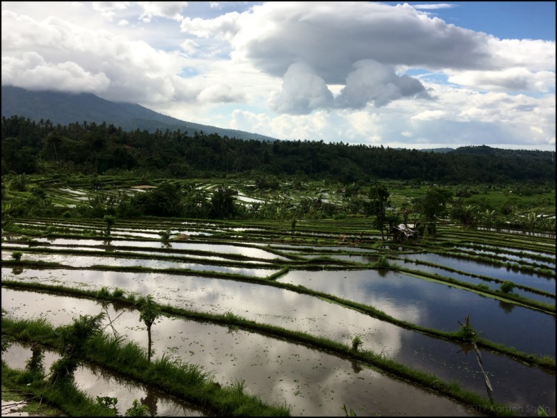Flooded rice paddies in Bali