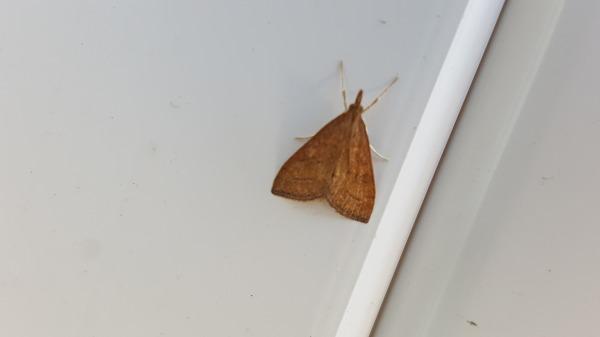 Moths have no backbone.