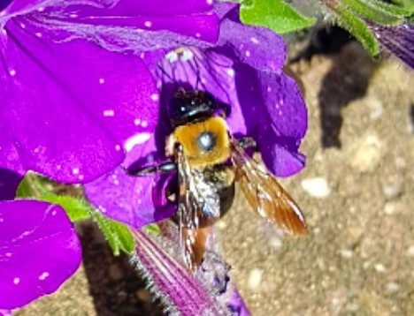 Bees have no back bone