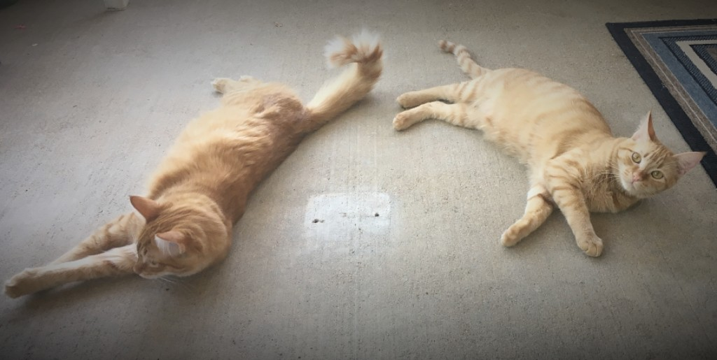 Georgie & Roxie