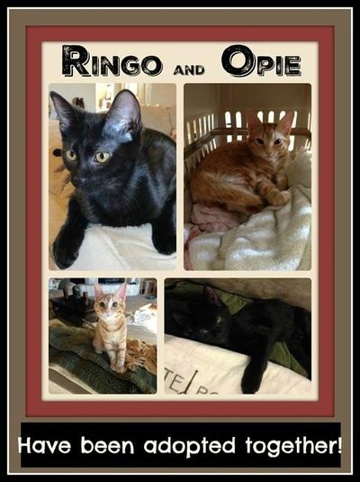 Ringo And Opie