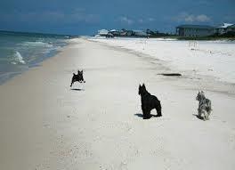 Dog Beach Tips