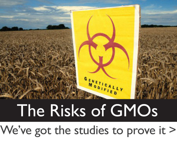Four reasons why foods produced with genetic engineering, or GMO are harmful to your health!