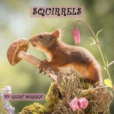 New squirrel book