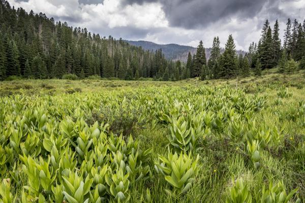 Horsethief Meadow 1