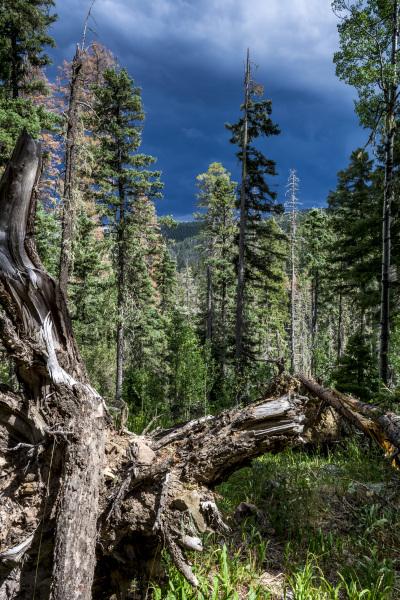 Cave Creek Trail, Pecos Wilderness.