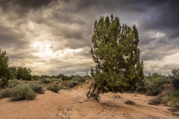 Diablo Canyon 2