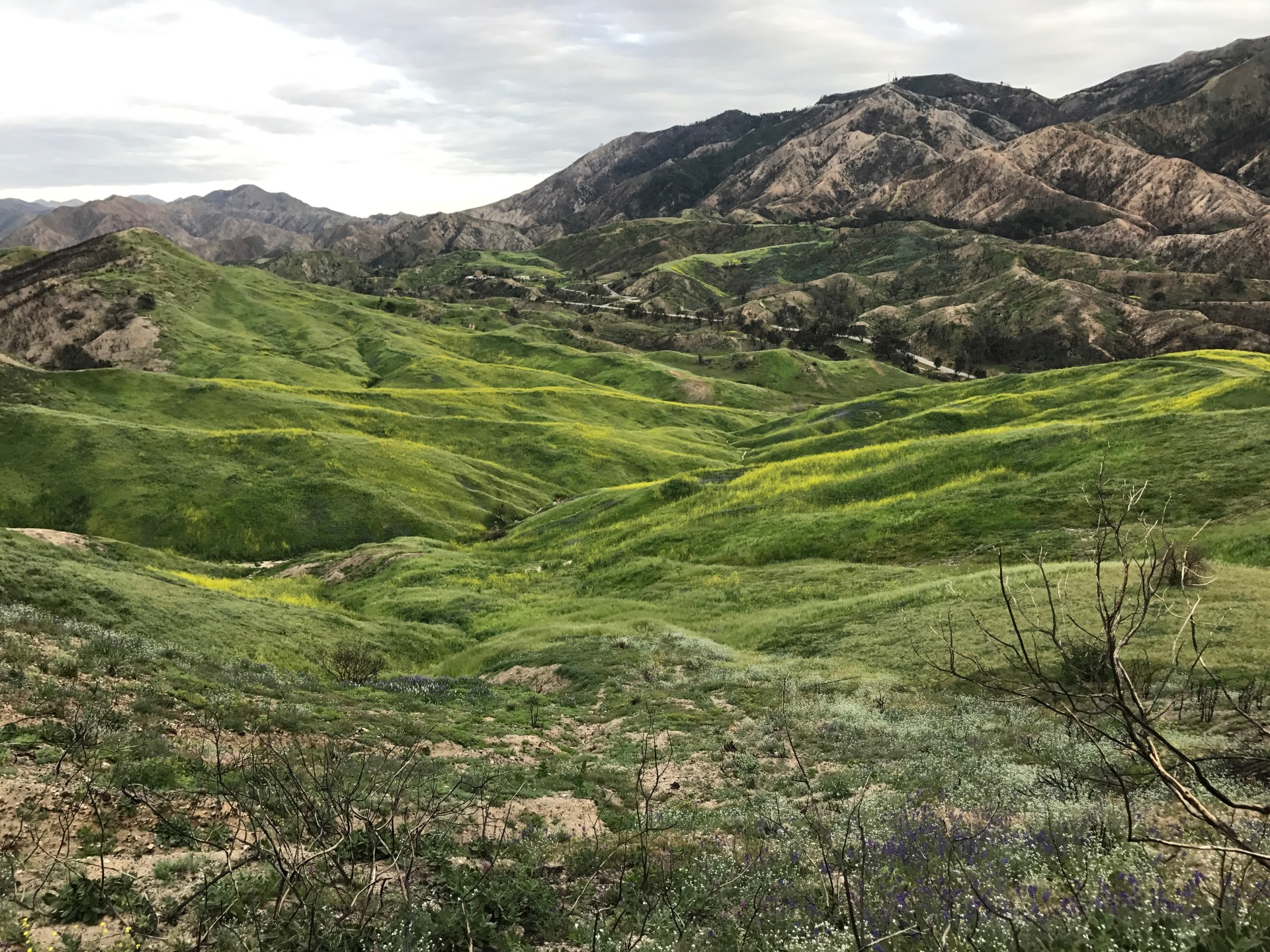 Rolling Hills in SCV