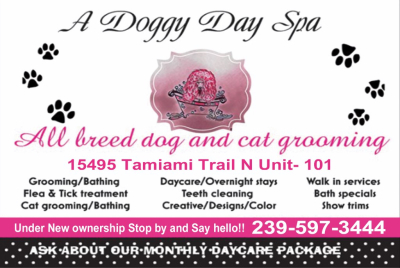 A Doggy Day Spa