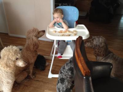 Dogs sitting around Fisher's high chair waiting for handouts