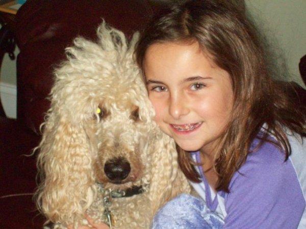 molly's darling doodles, goldendoodles, bernedoodles, standard poodles, golden mountain doodles, bernedoodle breeder, bernedoodle breeder in michigan, tri color bernedoodles,