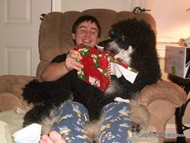 Levi the Poodle opening Christmas presents with Jared