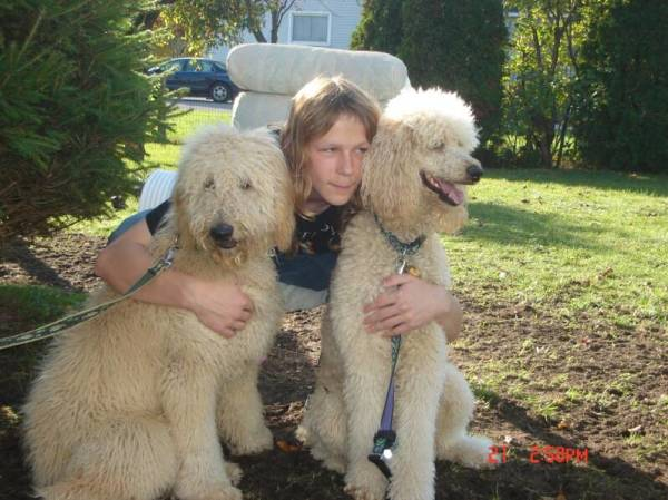 molly's darling doodles, goldendoodles, bernedoodles, standard poodles, golden mountain doodles, bernedoodle breeder, bernedoodle breeder in michigan, tri color bernedoodles,